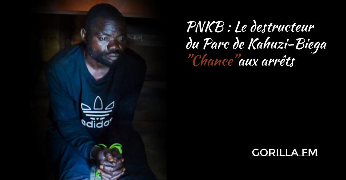 """Photo of PNKB : Le destructeur du Parc de Kahuzi-Biega""""Chance""""aux arrêts"""